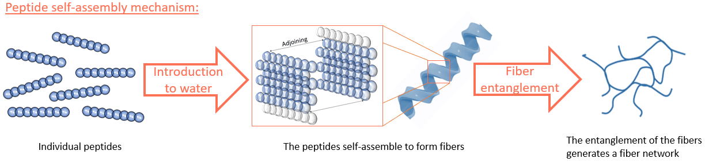 Peptide self assembly figure